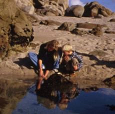 Photograph of people investigating a tide pool.