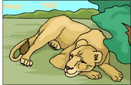 Drawing of a lion.